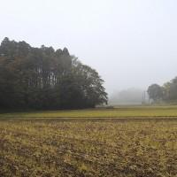 地元の谷地に行ってきました(平成28年11月20日)。