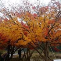 かやぶきの里「美山自然文化村」