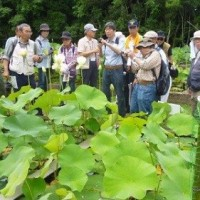 6月19日 船橋の「北総の森・巨樹古木研究会」の方々が見学に来られました
