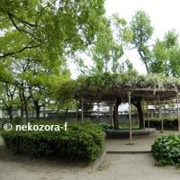 ふじめぐり(2017年)「吉野新家公園」