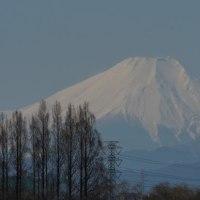 田んぼから富士山が見えた。