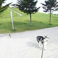 散歩時間をどうしよう