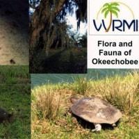 VORW Radio Int. via WRMI WRMIベリカード 局周辺の動植物