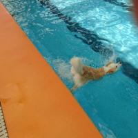 水泳部 活動開始ー!
