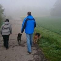 霧のち晴れ。
