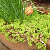 わが家の多肉植物ワンダーランド