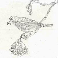 制作途中1 下描き(冬鳥)