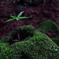 森の中の新芽