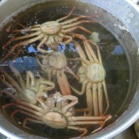 こうば蟹を捌く