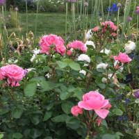 またまた、里山ガーデンに行く。