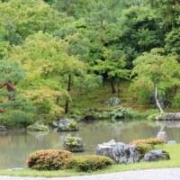 京都市右京区にある臨済宗天龍寺派大本山の天龍寺では、アジサイが咲いています