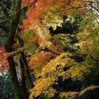 信貴山の紅葉(3)