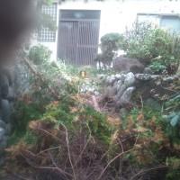 滞在型家庭菜園:庭木伐採
