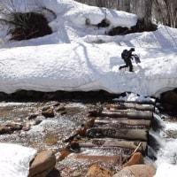 4月17日「早春のスノーシュートレッキング・巨木と沼めぐり」下見に行きました。