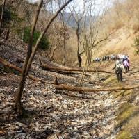 水曜ジョイフルウォークは、落ち葉を踏んで秋葉山(349m)ハイク。