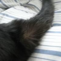 地震探知ネコさん
