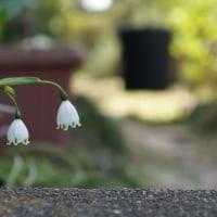 秘密の花園~♪