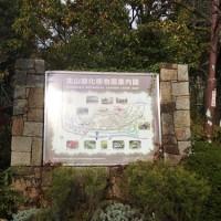 11月20日北山緑化植物園と六甲