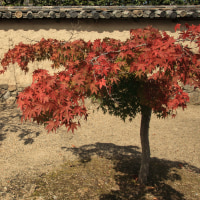 初秋の奈良