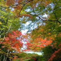 11月11日大窪寺の紅葉🍁