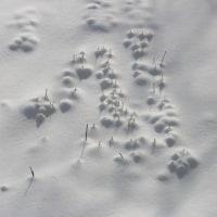 雪の遊び 年末のまだ少ない時