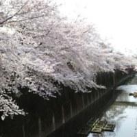 4月の催し~東京手描友禅・小倉悟展~