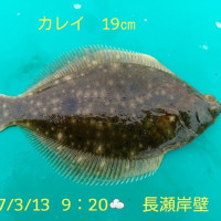 笑転爺の釣行記 3月13日☁ 長瀬・久里浜