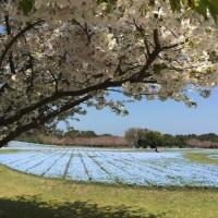 春♪春♫春~~~♬♫♪