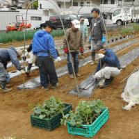 夏野菜 苗植え 第一弾 「きゅうり・ナス」