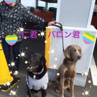 4月(桜・シュナウザーオフ会・しつけ方集合写真・ランチ)