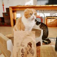 プレゼントとネコ