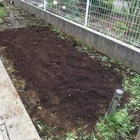 小玉スイカの植え付け準備が着々と進んでいます