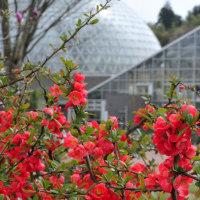 さすが春の植物園