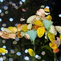弁天池の小判