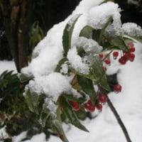 11月の雪