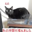 黒猫グッズのパリ土産など