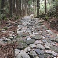 東海道53次ラン&ウォーク(4/23)箱根宿