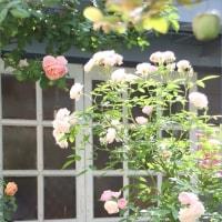 小屋とバラの五月