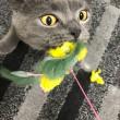 荒ぶる猫神