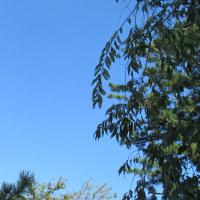 もっと青い空がみたい!・・・・