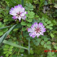 裏山は花盛りがつづきます。