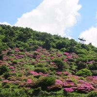 雲仙普賢岳 ミヤマキリシマと平成新山
