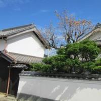 加東の秋の空-武家屋敷、鯉のぼり、カエデ