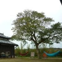 Onokoro-Business Trip Day.2