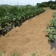 2017年7月16日(日)秋冬野菜の畑づくり