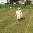 大豆の試験栽培