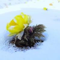 「早春の温もり」フォトコン誌 5月号、銅賞で掲載中!