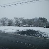 雪が降りました~