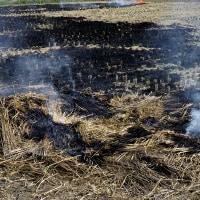 来年のための作業のようです!・・・稲刈り後の藁焼き