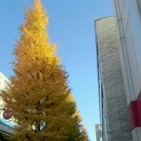 No.1092 ■きれいなイチョウと芸術劇場